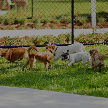 Large Dog Park at Sweetwater Heights Apartments